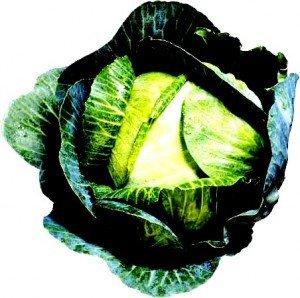 cabbage-300x298