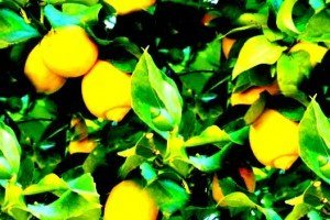 lemons-300x200