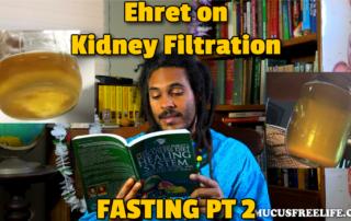 kidney filtration
